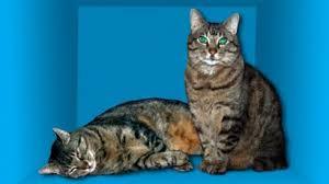Cómo encontraron la forma de salvar al gato de Schrödinger, el experimento  más famoso de la física cuántica - BBC News Mundo