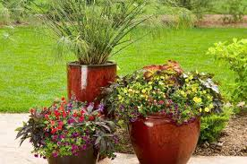 small space and container gardening