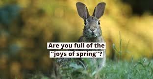 spring idioms in english spanish