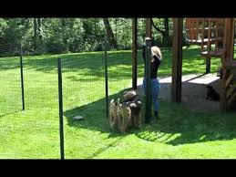 Garden Fencing Ideas For Dogs Video And Photos Madlonsbigbear Com