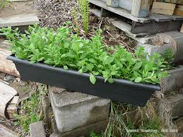 build window boxes for flowers wooden