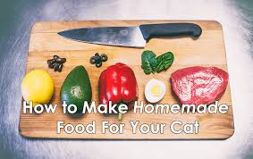 9 homemade cat food recipes that are