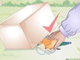 how to make a bird trap with pictures