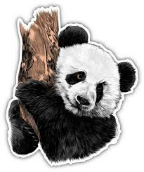 Panda Bear Drawing Art Vinyl Sticker Decal Car Truck Laptop Etsy