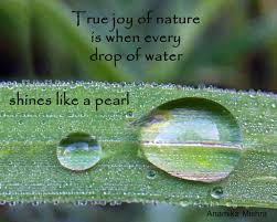 nature quote about a drop of water nature quotes mother nature