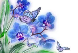 flowers erflies erfly soft
