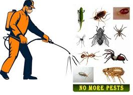 Commercial & Residential Pest Control Services, in Delhi Ncr, Rs 2500 /pack  | ID: 21713264448