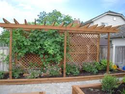 Trellis For A Grape Vine And Screen From The Neighbor Maybe Out Front Where The Neighbor Has Vines Already Backyard Backyard Landscaping Garden Privacy