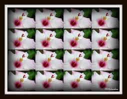 Tessellation Photograph by Priscilla Richardson