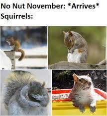 Dopl3r Com Memes No Nut November Arrives Squirrels