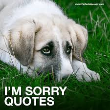 Image result for sorry quotes