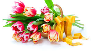 tulips beautiful flower wallpapers