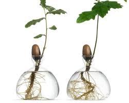 ilex studio s glass vases let you grow