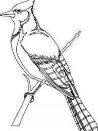 Kleurplaten Vogel Topkleurplaat Nl