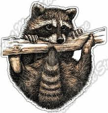 Cute Raccoon Racoon Baby Funny Animal Car Bumper Vinyl Sticker Decal 4 X5 Ebay