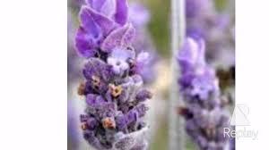 أجمل الأزهار البنفسجية The Most Beautiful Purple Flowers Youtube