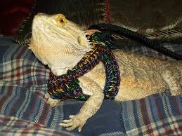 yoshi s lizard leash pet items