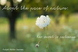 quotes that will rekindle your connection to nature