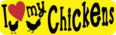 10in X 3in I Love My Chickens Bumper Sticker Vinyl Truck Window Car Decal Stickertalk