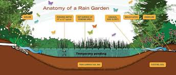 anatomy of a rain garden rain garden