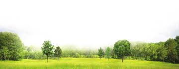 green scenary