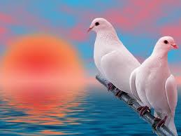 من الطيور الجميلة بالصور