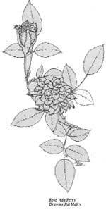 San Diego Floral Association - Home - Mediterranean Climate Gardening
