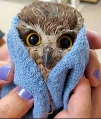 Baby Eule in einem Handtuch | Süßeste haustiere, Eulen tiere, Eule