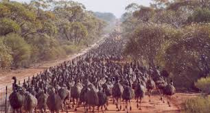 Controversy Over Wa S Rabbit Proof Fence Plans Australian Geographic