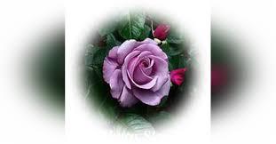 Carolyn Aline Patterson -GLBFH Obituary - Visitation & Funeral Information