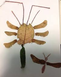 Making made up mini beasts using leaves and other natural objects ...