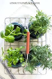 indoor mason jar herb garden for the
