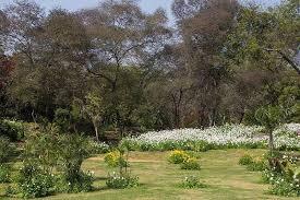 buddha jayanti park delhi timings