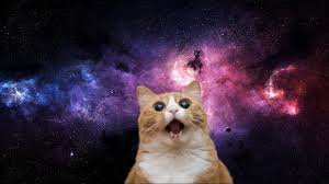 cats in e wallpapers top free