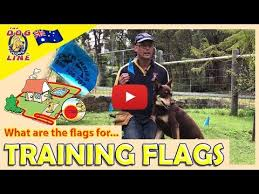 Electric Dog Fence How Does Training Flags Help Your Dog Fence Training Youtube