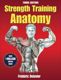 strength anatomy third
