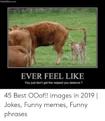 Funny Cow Photos Posted By Christopher Walker