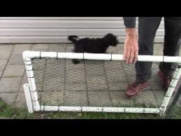 Simple Yard Gate Pvc 1 Inch Pipe For Dog Rustproof Hinged Fencing Youtube