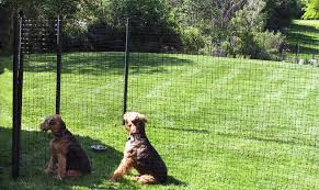 Temporary Fencing For Your Dog Fences For All Dogs