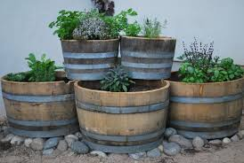 tips for growing a wine barrel garden