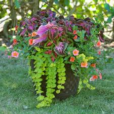 container flowers for shade flowers