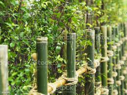 Bamboo Fence And Tropical Tree In Asian Green Garden Stock Photo Download Image Now Istock