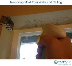 clean mold on painted walls and ceiling