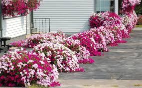 flower garden design for full sun