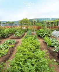 20 simple gardening tips for creating a