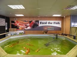 heighley gate maidenhead aquatics fish