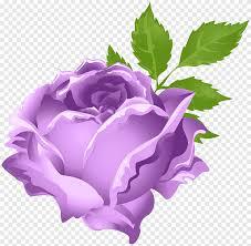 زهرة أرجوانية حديقة الورود الأرجواني الورود Centifolia بيربل