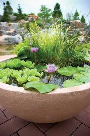 container water gardens