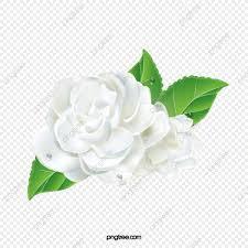 الياسمين الياسمين زهور عنصر زهرة Png وملف Psd للتحميل مجانا