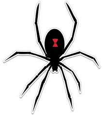 Amazon Com Black Widow Spider Graphic Vinyl Sticker Waterproof Decal Clothing